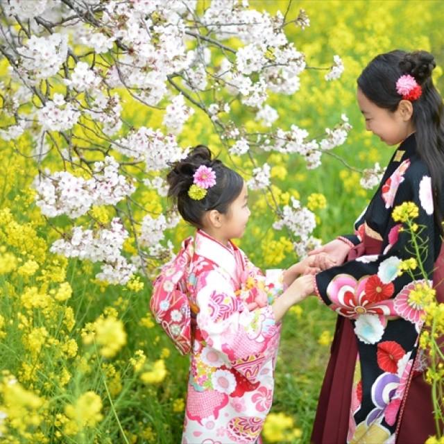 桜×七五三4