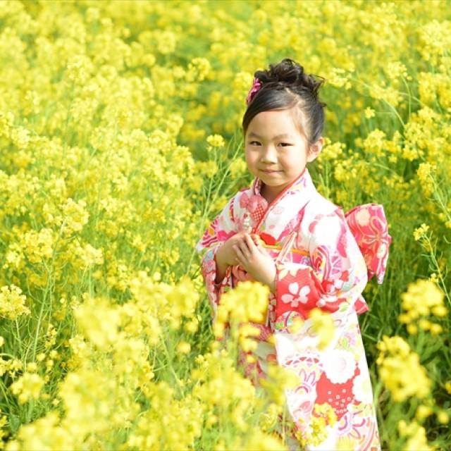 桜×七五三3