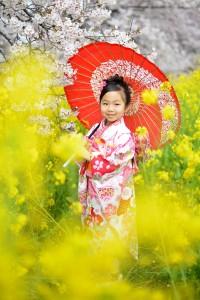 桜&七五三 3歳和傘