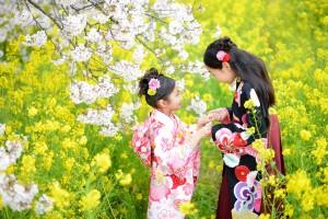 桜&七五三 3歳姉妹
