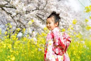 桜&七五三 3歳女子